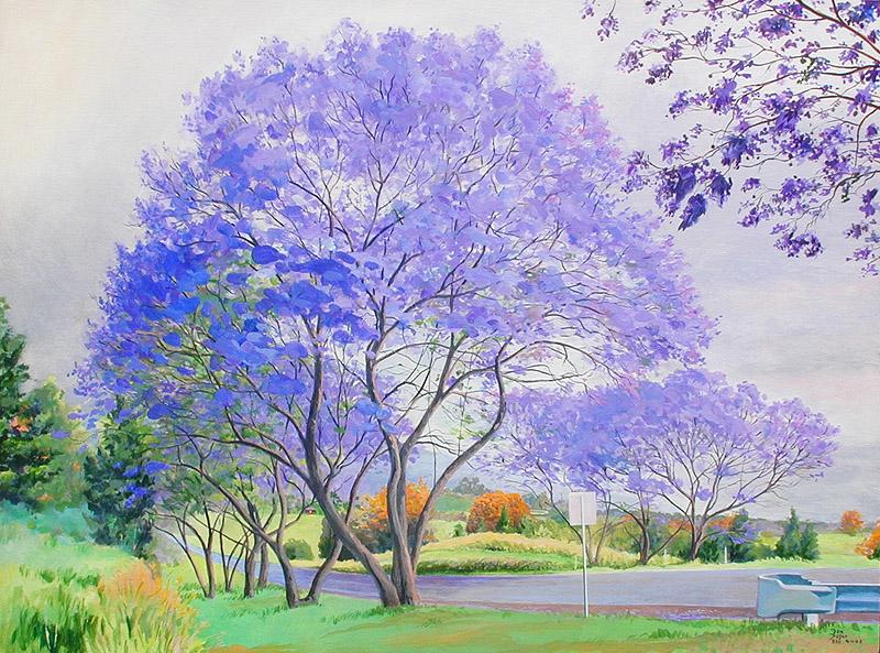 jacaranda trees in kula maui 4 11 3